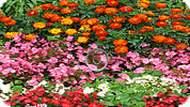 Игра Сердца в цветах