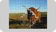 Пазл корова