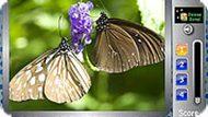 Бабочки и буквы