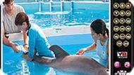 Игра История дельфина