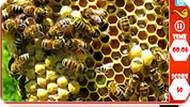 Найди пчёл