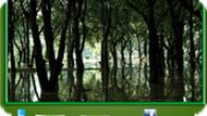 Игра Тёмный лес