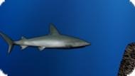 Игра Акула 5