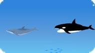 Игра Акула и дельфин