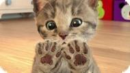 Игра Приключения Маленького Котенка Пазл