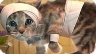 Игра Приключения Маленького Котенка