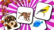 Игра Память Животных / Animals Memory