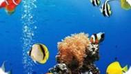 Игра Море Подводное Различие / Sea Underwater Difference