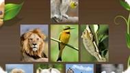Игра Пазлы С Животными
