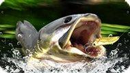 Игра Рыбалка В Тихом Озере
