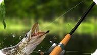 Игра Утренняя Рыбалка