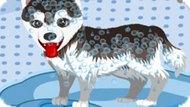 Игра Милое Купание Собаки / My Cute Dog Bathing