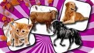 Игра Проблема Памяти Домашнего Животного / Domestic Animal Memory Challenge