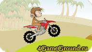 Le singe a moto