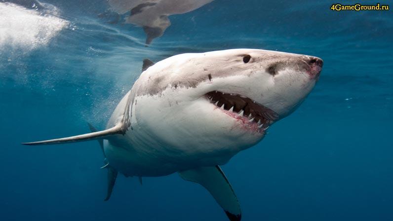 Игры акулы - кровожадный хищник в твоем браузере!