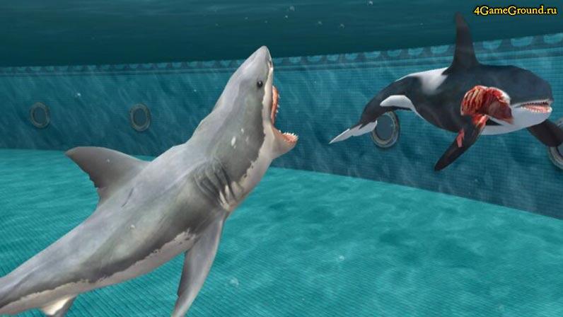 Игры акулы - опасны как в жизни!