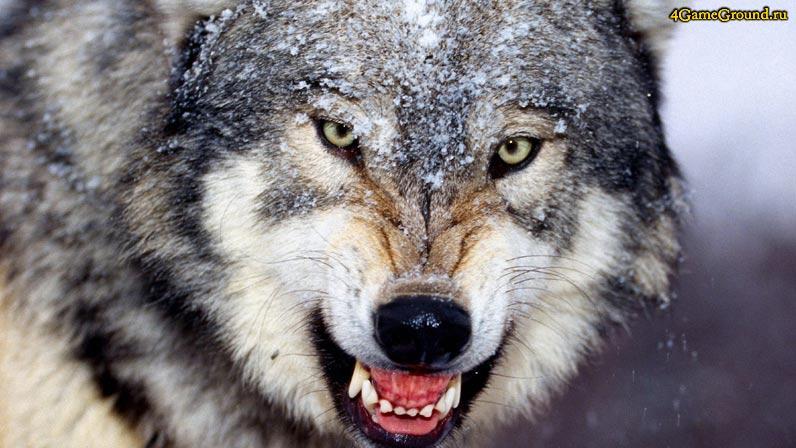 Игры волки - свирепый хищник в твоем браузере!